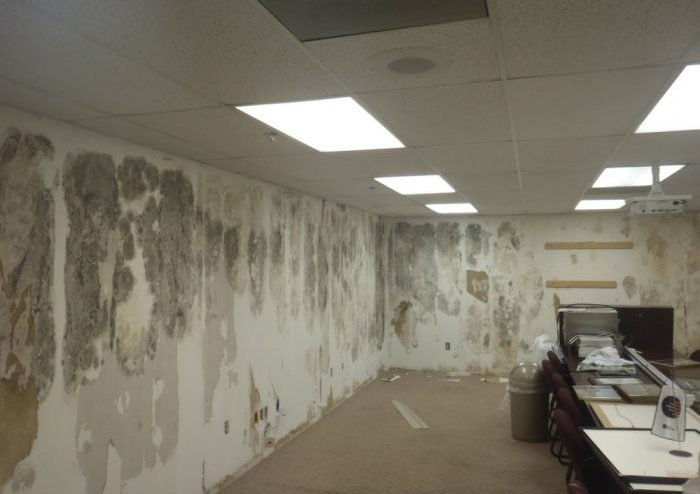 Commercial Mold Damage